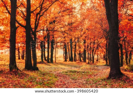 Autumn colored natural landscape - oak forest in autumn sunny evening at the sunset. Soft focus  and creative filter processing - stock photo