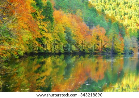 Autumn colorful foliage over lake with beautiful forest  in red and yellow color.  - stock photo