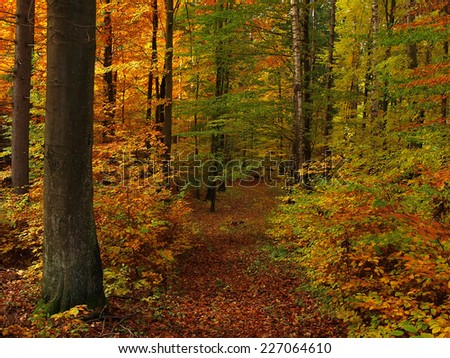 Autumn colorful forest - stock photo