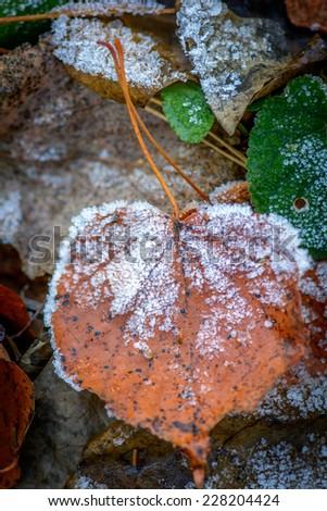 Autumn colorful leaf with hoarfrost, shallow DOF. - stock photo