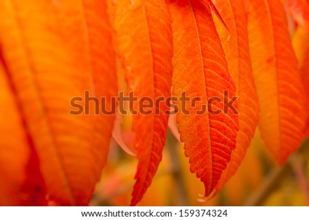 Autumn Colorful Leaves - stock photo
