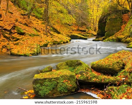 Autumn colorful mountain river. White foamy rapids in curve of river. Gravel and boulders on river banks covered with colorful leaves, fresh green mossy stones.  - stock photo
