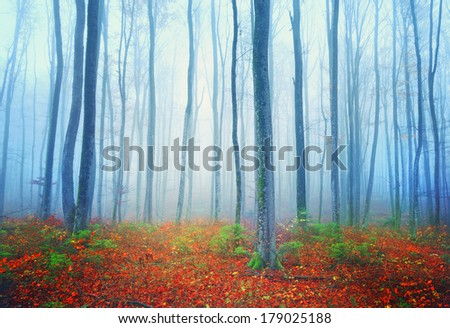 Autumn colorful mysterious forest landscape. - stock photo