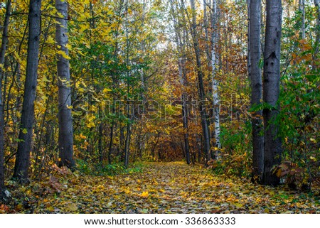 Autumn colorful path