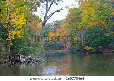 Autumn Colors abound in a quiet cove on the Chesapeake Bay in Maryland while a Great Blue Heron rests on a Tree limb - stock photo