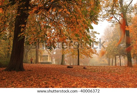 Autumn colors and falling leaves in a Dutch park.