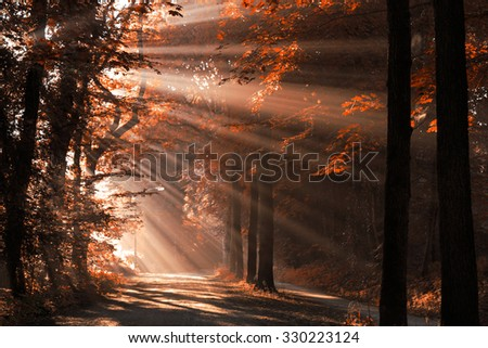 Autumn colors and sun rays shining through the trees on an empty lane in the forrest. - stock photo