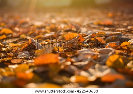 Autumn colors. Autumn leaves in autumn colors and lights - stock photo