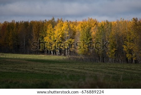 Autumn colors brighten the landscape near Drayton Valley AB