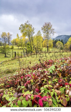 Autumn colors in rainy day in Savsat