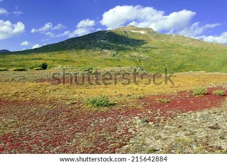 Autumn colors in the Alpine Tundra, Rocky Mountains, Colorado - stock photo