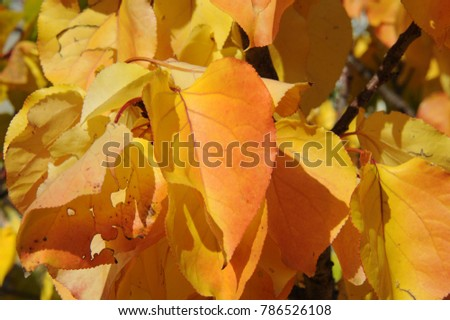 Autumn colors in the forest, Costa Blanca - Spain