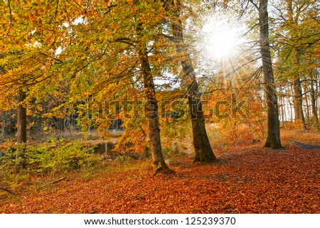 Autumn colors in the forest - Denmark - stock photo