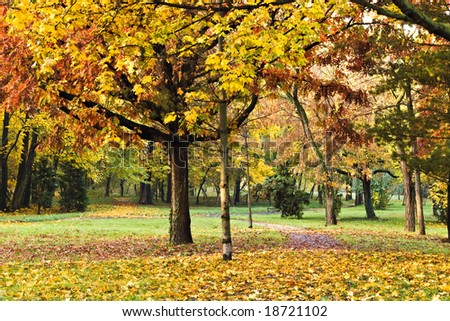 autumn colors in the park