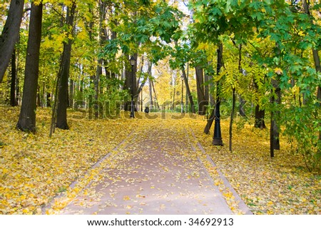autumn colors in the park,  fall landscape
