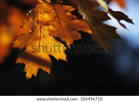 Autumn colors, light and shapes