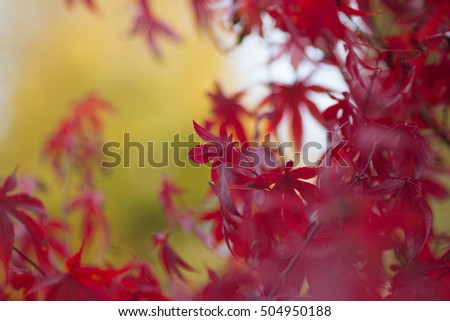 Autumn colors, with shallow focus and beautiful bokeh