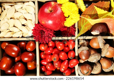 Autumn composition in decorative wooden box, close up - stock photo