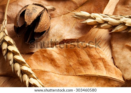 Autumn composition: The leaves, acorns, wheat. Shallow depth of field