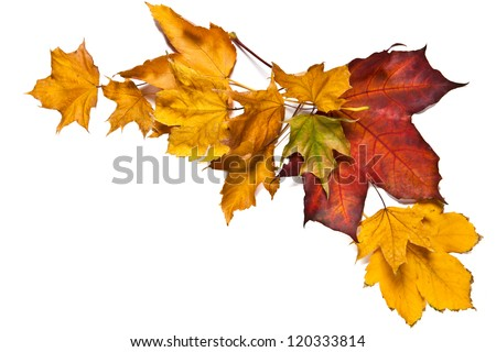 Autumn composition with colorful leaves of maple trees in a corner of the frame on a white background - stock photo