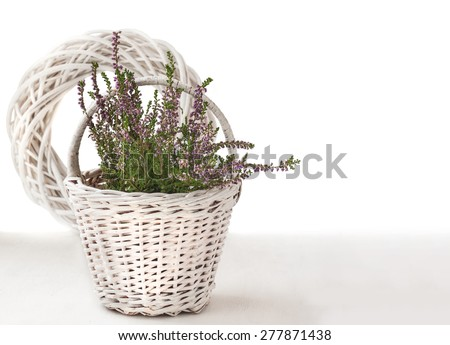 Autumn composition with heather in a basket  on a white background isolated - stock photo