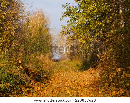 Autumn country road in forest - stock photo