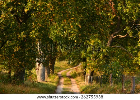 autumn country road with trees - stock photo