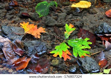 Autumn Creek Background - stock photo