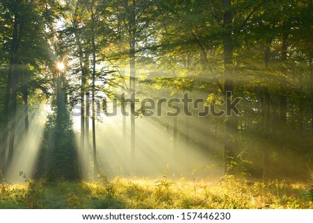 Autumn dawn in forest - stock photo