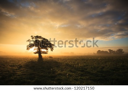 Autumn dawn on a lone tree - stock photo