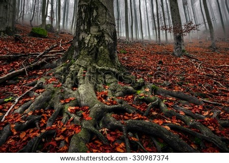 Autumn day in the enchanted forest at fall - stock photo