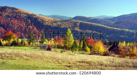 Autumn day Ukrainian Carpathians colorful trees, with the sun shining haze gentle rays with spectacular lighting effects.  beech birch is very beautiful on the background of blue mountains