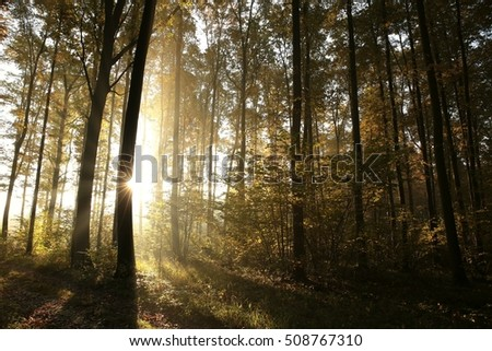 Autumn deciduous forest at sunrise.