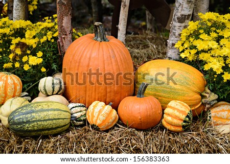 Autumn decor in a woodland setting.  Pumpkins, squash, gourds, chrysanthemums, and hay arranged in a fall outdoor display.