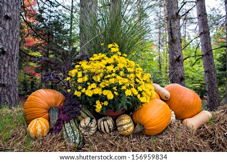 Autumn decor in a woodland setting.  Pumpkins, squash, gourds, chrysanthemums, and hay arranged in a fall outdoor display. - stock photo