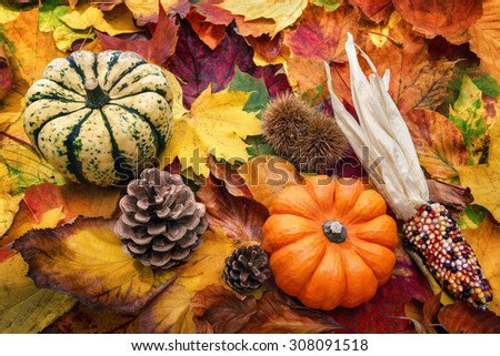 Autumn decoration arranged with natural elements such as colorful dry leaves, ornamental pumpkins and cones