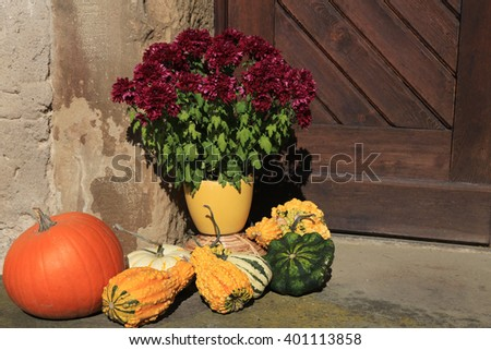 Autumn decoration with pumpkin and aster flower - stock photo