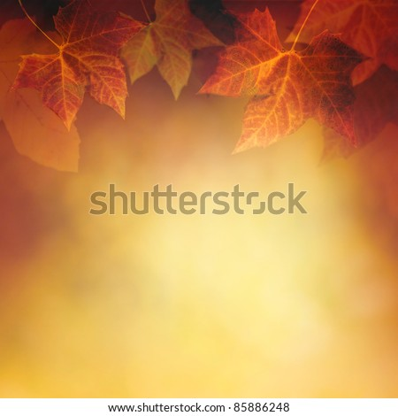Autumn design background with colorful red and yellow leaves falling from the tree - stock photo
