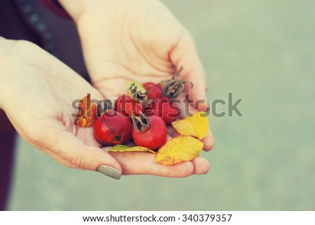 autumn dog rose berries in beautiful female hands