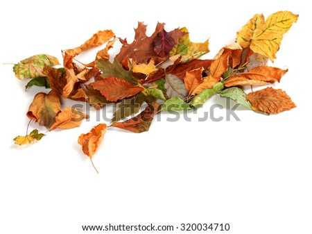 Autumn dried leafs isolated on white background with copy space - stock photo