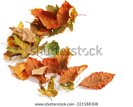 Autumn dried leafs. Isolated on white background with copy space - stock photo