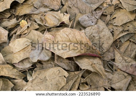 autumn dry leaves fall on the ground