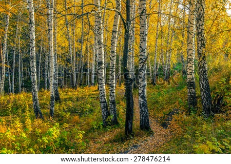 Autumn evening in the birch forest - stock photo