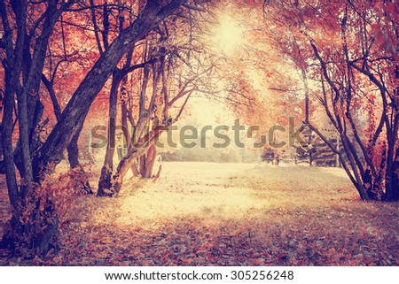 Autumn. Fall. Autumnal Park. Autumn Trees and Leaves   - stock photo