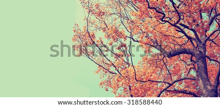 Autumn. Fall. Autumnal Park. Autumn Trees and Leaves