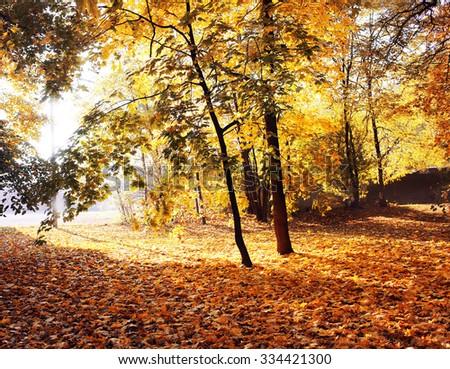 Autumn. Fall. Autumnal Park. Autumn Trees and Leaves in sun rays. Autumn scene - stock photo