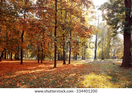 Autumn. Fall. Autumnal Park. Autumn Trees and Leaves in sun rays. Autumn scenen.