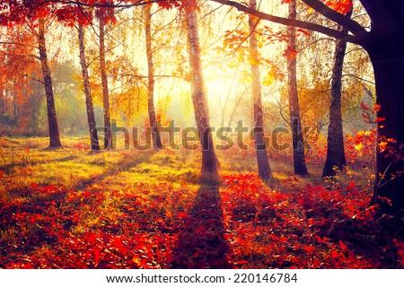 Autumn. Fall. Autumnal Park. Autumn Trees and Leaves in sun rays. Beautiful Autumn scene  - stock photo