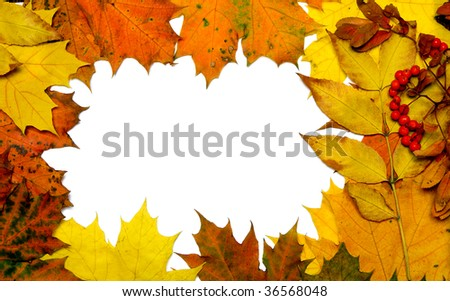 autumn fall leaf frame background