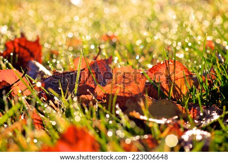 Autumn / Fall leaves, crisp orange, red and brown leaves naturally lying on fresh green grass with early morning dew drops sparkling in the sun - stock photo
